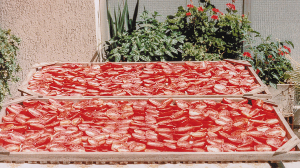 Roma Tomatoes Drying In The Sun