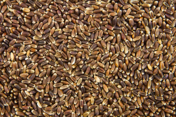 close up of rye grains