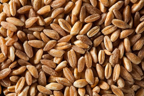Organic Raw Farro Grain in a Bowl