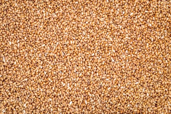 gluten free teff grains